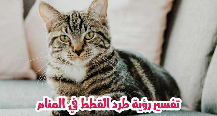 تفسير رؤية طرد القطط في المنام بمختلف اشكالها موقع الفرعون